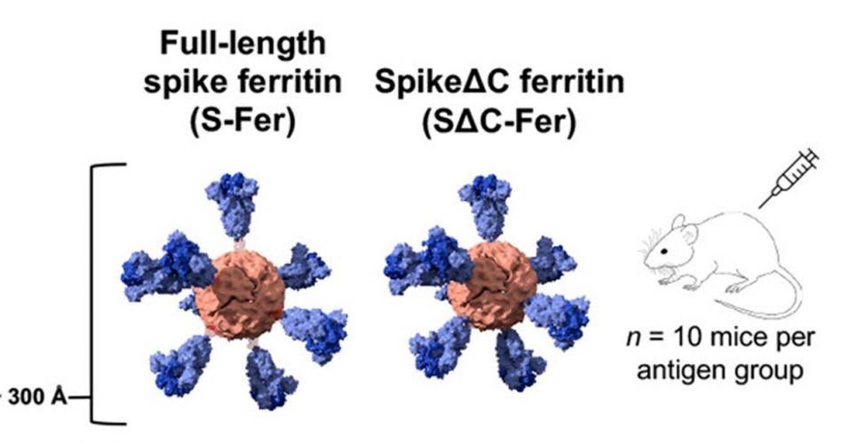 Covid_una-vacuna-de-nanopartículas_1200x628
