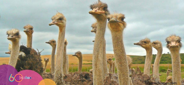 eventos-avestruces